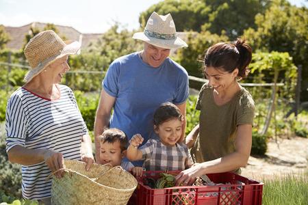 Grandparents With Adult Daughter And Grandchildren On Allotment Standard-Bild