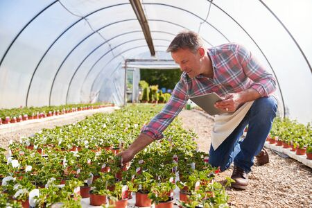 Mature Man Working In Garden Center Greenhouse Holding Digital Tablet And Checking Plants Stock fotó