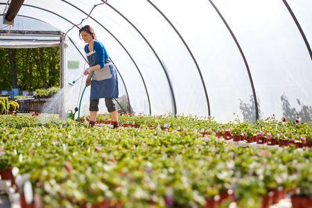 Mujer madura que trabaja en el centro de jardinería regar las plantas en invernadero