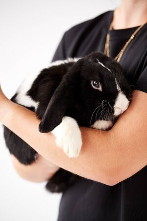 Close Up Of Owner Holding Miniature Black And White Flop Eared Rabbit On White Background