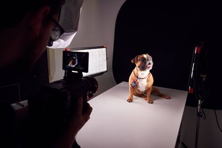 Videographer Filming Bulldog Puppy Wearing Tie Against Black Background Imagens