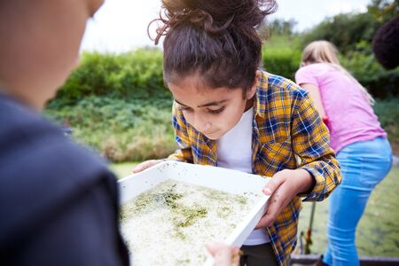 Two Girls On Outdoor Activity Camp Studying Pond Life Found in Weeds