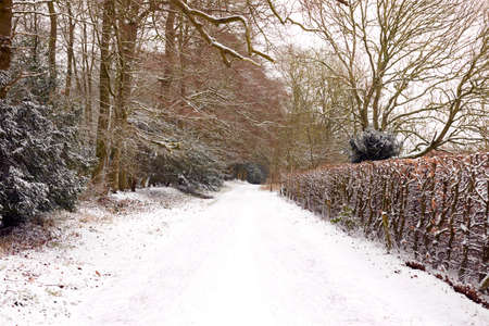 Tree Lined Track Through Countryside Covered In Winter Snow
