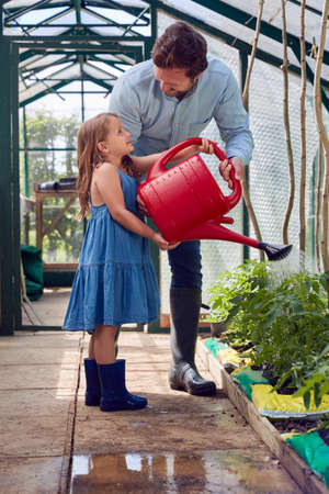 Daughter Helping Father To Water Tomato Plants In Greenhouse At Home Standard-Bild