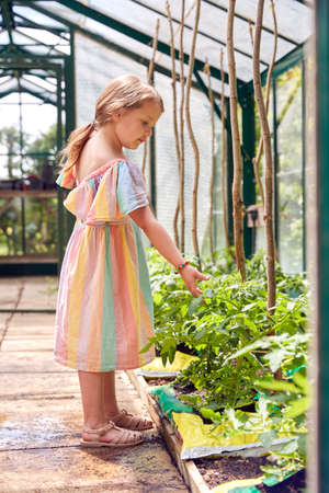 Young Girl Looking At Tomato Plants In Greenhouse At Home Standard-Bild