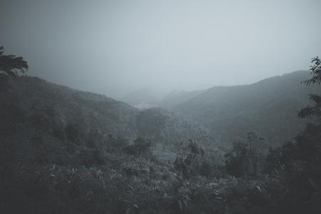 Misty landscape with trees B W Stock Photo