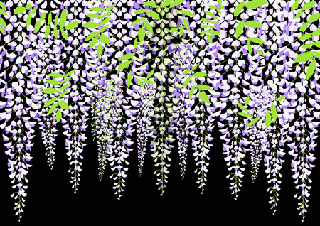 Blooming wisteria branch with leaves