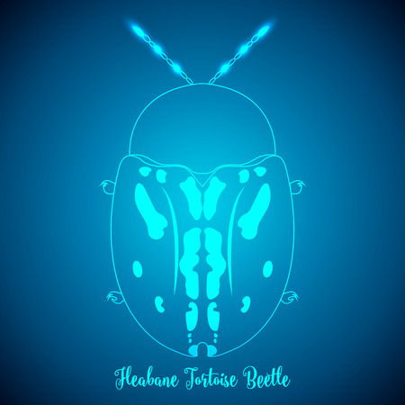 brindled: Fleabane Tortoise Beetle and abstract backgrounds blue lights.vector illustration.