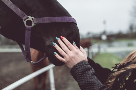 girl stroking the nose of a big brown horse