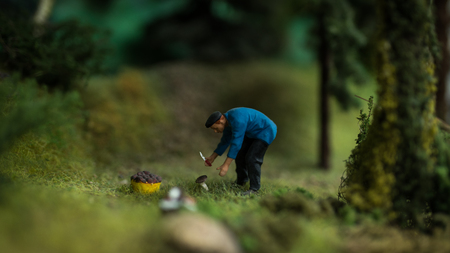 Close up of Miniature World, Man collects mushrooms