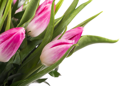 Beautiful bouquet of tulips isolated on white background Standard-Bild