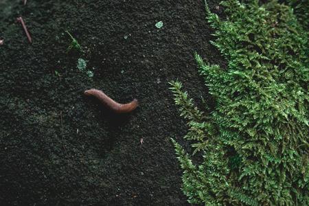 Green Moos bedeckt Sandstein Rock und Schnecke auf sie, Natur Hintergrund Textur