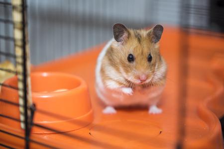 Hamster existentielle Krise Sein oder nicht sein.