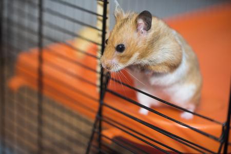 Hamster versucht, aus dem Käfig zu entkommen