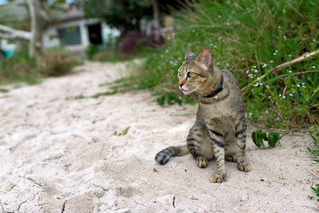 Cute domestic cat siting at the sand