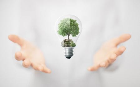 Árbol en una bombilla, medio ambiente, energía alternativa