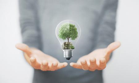 Tree in a lightbulb, environment, alternative energy