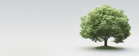 Tree, nature, life, environment, 3d render illustration
