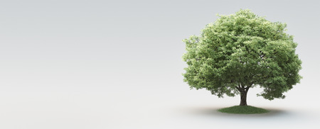 Tree, nature, life, environment, 3d render illustration