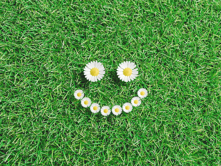 Daisiess smile on green grass, 3d render illustration Stock Photo