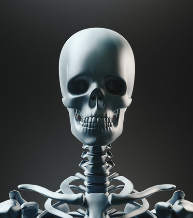 Human skeleton, body bones, 3d render illustration