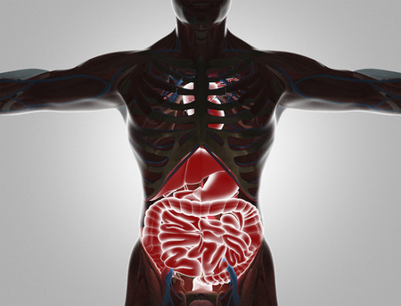 Human body with visible organs, 3d render illustration Фото со стока
