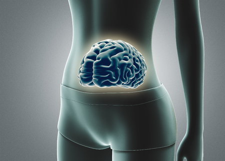 Human brain in stomach, 3d render illustration
