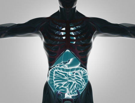 Human body with visible organs, 3d render illustration Imagens