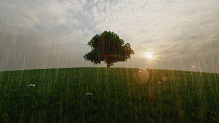 High resolution. A tree standing alone in the rain in a lawn. Dramatic scenery. 3d rendering 스톡 콘텐츠