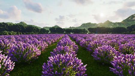 Image shows a rich lavender field in Provence, France, with a lone tree in the background. 3d rendering Standard-Bild
