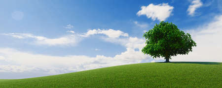 High resolution banner. A tree standing alone in a lawn. 3d rendering