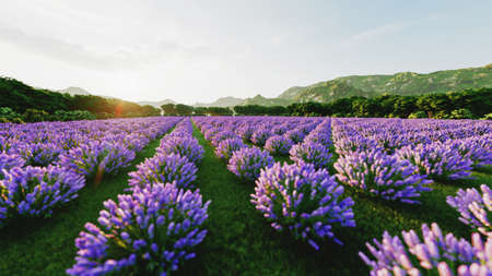 Image shows a rich lavender field in Provence, France, with a lone tree in the background. 3d rendering