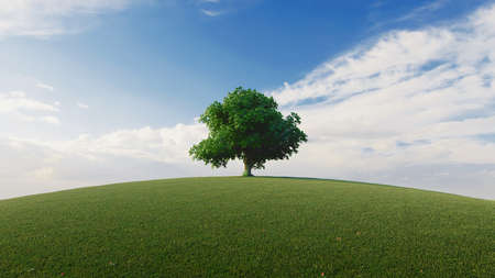 High resolution. A tree standing alone in a lawn. 3d rendering