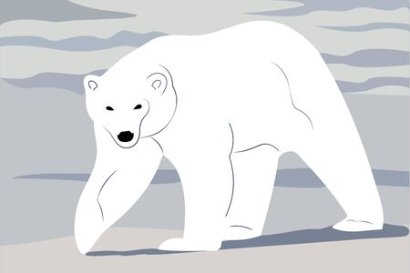 vector illustration of a polar bear in the snow 矢量图像