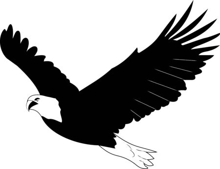 vector black and white graphic illustration of a flying eagle, a soaring eagle, an eagle in the sky