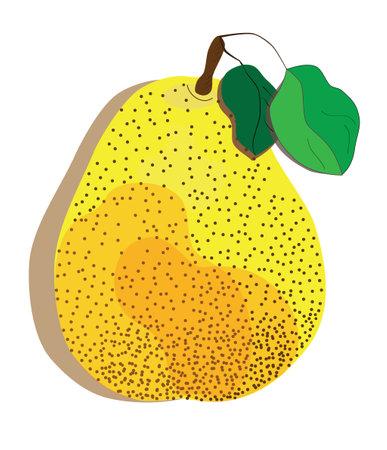 color vector illustration of pear Vektoros illusztráció