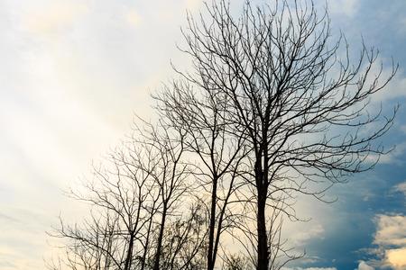 dispirited: Dry trees