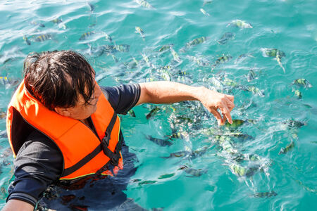 trang: Thai man is feeding to group of Amphiprion in Andaman sea at Trang ,Thailand
