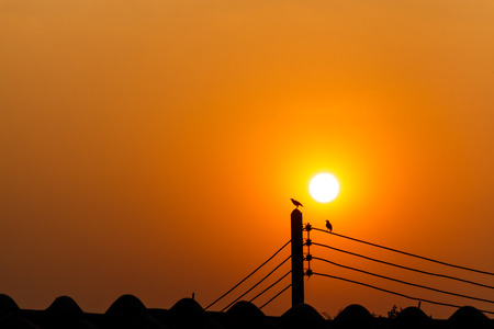 couple birds on electricity post in the evening  silhouette  and blank area at upper side photo