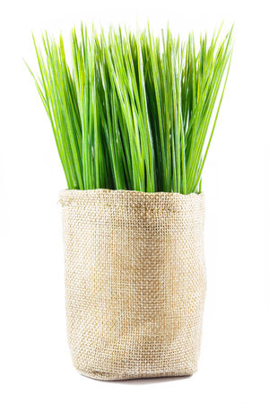 plastic made: artificial grass in sack on white background (isolated) Stock Photo