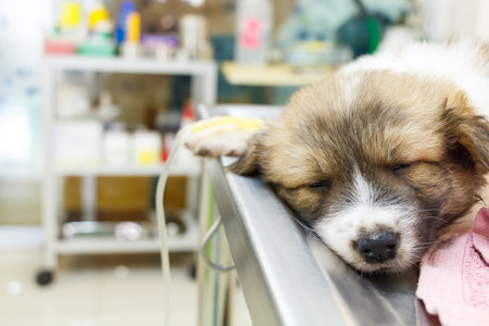 sick room: illness puppy with intravenous drip on operating table in veterinarians clinic