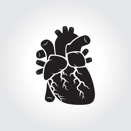 human s heart anatomy icon