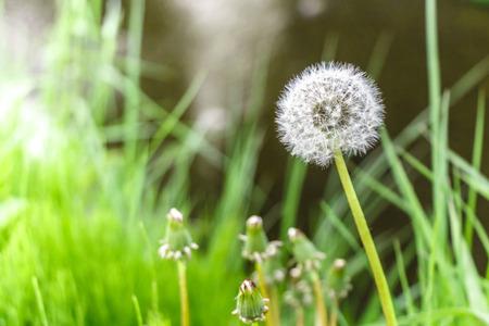 flue season: Grass flower in Japan