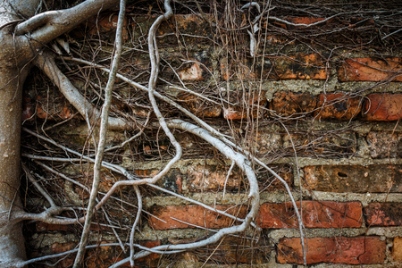 weald: Old wall and root of tree (vignette style)