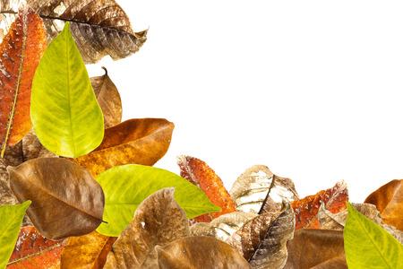 overlap: Leaves overlap background