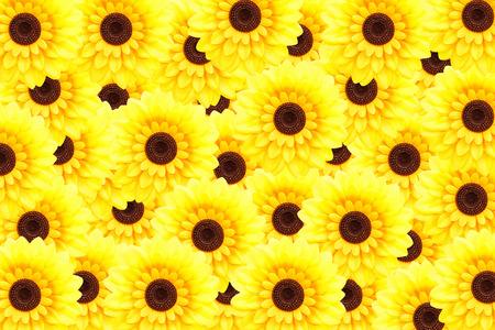 helianthus annuus: Artificial sunflower background (Helianthus annuus)