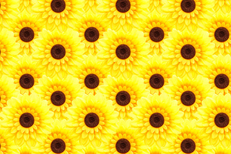 tightly: Artificial sunflower background (Helianthus annuus)