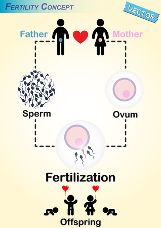 relaciones sexuales: Diagrama de Fertilización Humana (hombre producen espermatozoides, Mujer productos óvulo, espermatozoide y el óvulo se fertilizaron, dar a luz a un bebé) Vectores