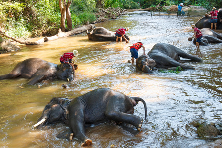Thaise olifant was een bad nemen met mahout (olifant bestuurder, olifant keeper) in Maesa Elephant Camp, Chiang Mai, Thailand