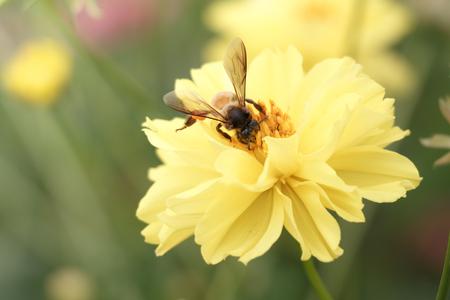 bee swarm: bee swarm flower ( vintage style )